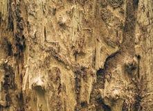 Uszkadzający drzewny bagażnik jedzący termitami Obraz Royalty Free