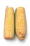 uszy kukurydziane ponad dwie białe Fotografia Royalty Free