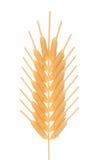 uszy kukurydzy Obraz Royalty Free