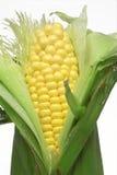 uszy kukurydzy fotografia stock