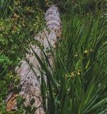 Utá, Cedar Bricks National Park Fotografia de Stock Royalty Free