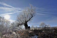 Utöver det vanliga frostat träd Arkivfoton