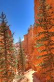UT-Bryce Canyon National Park Stock Images