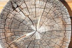 Ut del ¡ di Ð di vecchio tronco grigio Fotografie Stock Libere da Diritti