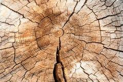 Ut do ¡ de Ð de um tronco velho Fotografia de Stock