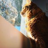 Ut fönstret Royaltyfria Bilder