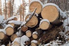 Ut omhoog sluiten de oude bomen Ð ¡ Front View Opent het de winterbos het programma royalty-vrije stock foto