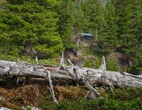 Hut in the taiga Stock Photo