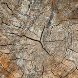 Сut tree, stump. Stock Image