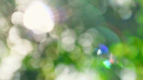 Ut ur bakgrund för fokusgräsplannatur Solsken till och med gröna sidor lager videofilmer