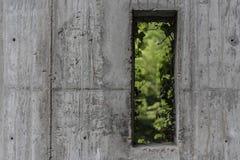 Ut ur fönstret Arkivfoton
