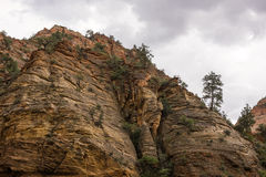 UT-Zion National Park-Zion Canyon Royalty Free Stock Image