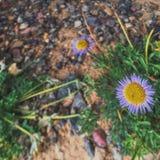 Utah, Cedrowy cegła park narodowy Zdjęcie Royalty Free