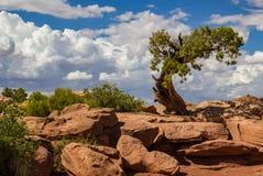 Utah chmury i jałowiec zdjęcie royalty free