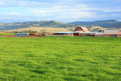 Utah Dairy farm Stock Photography