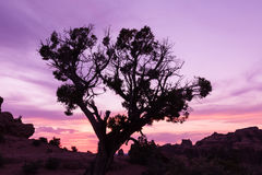 Utah Desert  Sunset Royalty Free Stock Photo