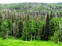 Utah& do sul x27; floresta de s Imagem de Stock