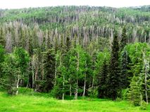 Utah& du sud x27 ; forêt de s Image stock