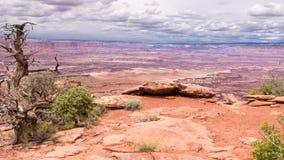 Utah jałowiec, Biały obręcz Przegapia ślad, Canyonlands obywatela norma Zdjęcia Royalty Free