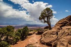 Utah Juniper Stock Photography