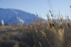 Utah mokrej ziemi jałowa ziemia zdjęcie royalty free