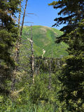 Utah Mountain - 1 stock images