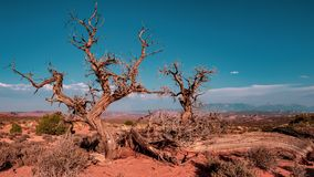 Utah-Wacholderbusch, wölbt Nationalpark stockfotos
