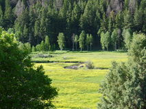 Utah wasatch mountains. Peaceful quiet Utah Wasatch mountain river flowing through a field Stock Images