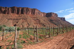Utah-Weinberg lizenzfreies stockbild