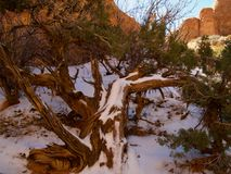 Utah Winter at Arches. Arches National Park in Utah offers spectacular views of mountains and rock formations.  Beautiful in Winter. Snow and color Royalty Free Stock Photo