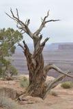 Utah Wycieczka Zdjęcia Royalty Free