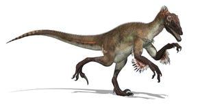 utahraptor динозавра Стоковые Изображения