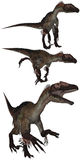 Utahraptor Royalty Free Stock Images