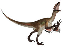 Utahraptor Stock Photography