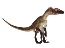Utahraptor Stock Photo