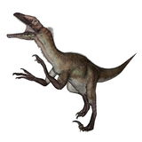 Utahraptor dinosaur roaring - 3D render Stock Images