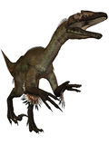 Utahraptor ostrommayorum-3D Dinosaur Stock Photo