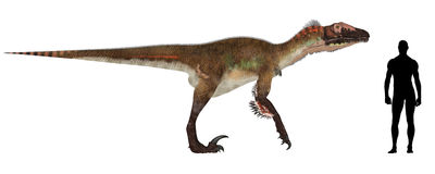 Utahraptor Size Comparison Royalty Free Stock Image