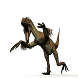 Utahraptor Royalty Free Stock Photos