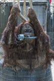 Utan Affeabschluß des Orang-Utans herauf Porträt am Zoo Lizenzfreies Stockbild