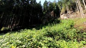 Utan laga kraft ställepanorama för skog lager videofilmer
