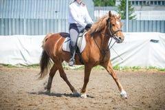 Utbilda i hästridning, tillträdesnivå Cavaletti på en trav Royaltyfria Foton