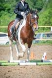 Utbilda i hästridning, tillträdesnivå Cavaletti på en trav Arkivfoto