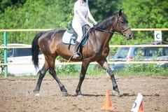 Utbilda i hästridning, tillträdesnivå Cavaletti på en trav Fotografering för Bildbyråer