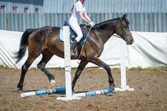 Utbilda i hästridning, tillträdesnivå Cavaletti på en trav Royaltyfria Bilder