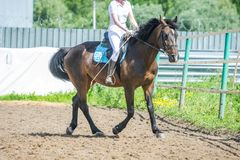 Utbilda i hästridning, tillträdesnivå Cavaletti på en trav Royaltyfri Bild
