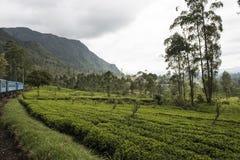 Utbilda in i tekolonier Ella Sri Lanka Arkivfoton