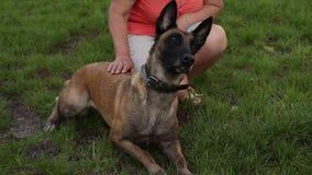 Utbildning av en herdehund med en hundförare på gräsyttersidan på en solig dag lager videofilmer