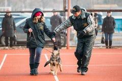Utbildning för hund för tysk herde i regionala Gomel royaltyfria foton
