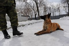 Utbildning för polishund Royaltyfri Bild